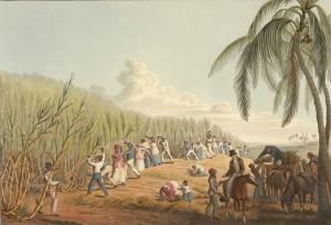 """""""Cutting the Sugar Cane"""" by William Clark (1823)"""